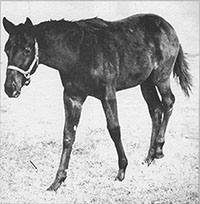 """What's this weanling's value?"" was asked in 1962 of the filly by Hail to Reason out of Searching. Raised at Hirsch Jacobs' Stymie Manor Farm in Monkton, Md., Admiring eventually set a world record public auction price."