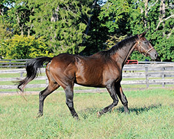 Former timber horse Tarsky (Fr) is a fixture at Country Life Farm in Maryland